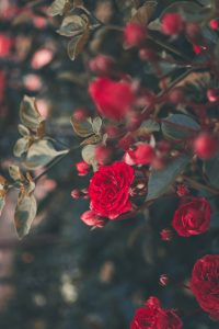 Personality Type A doesn't have time to smell the roses.