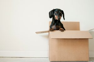 puppies inside breakup subscription boxes
