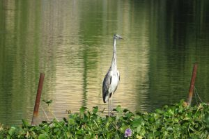 heron as a sign of hope after sexual assault