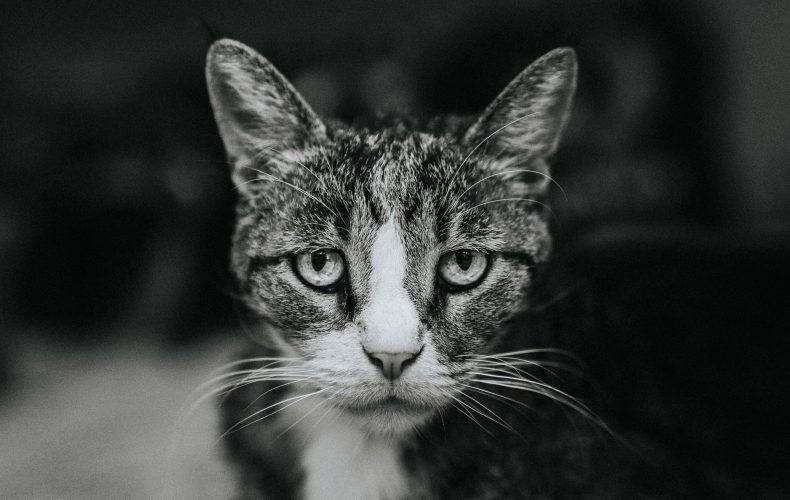 stray cats don't make great romantic partners